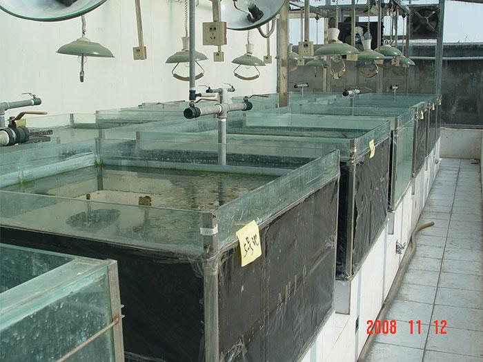 泓宝-肥水菌培藻试验